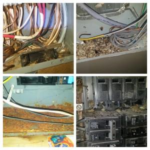 Electrical Panel Maintenance